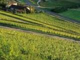 ein Weingut in Franken<br /> <br /> Bildquelle: Weingut Schmitts Kinder