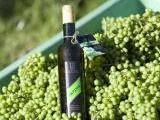 eine Weinflasche Verjus zwischen den Trauben<br /> <br /> Bildquelle: Fellbacher Weingärtner eG
