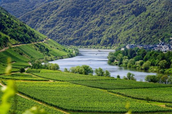 Weinregion Mosel